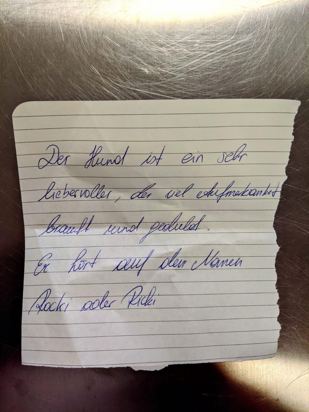 Kleiner Mischlingshund wurde mit einem Brief an eine Haustür angebunden zurückgelassen. TierQuarTier Wien.