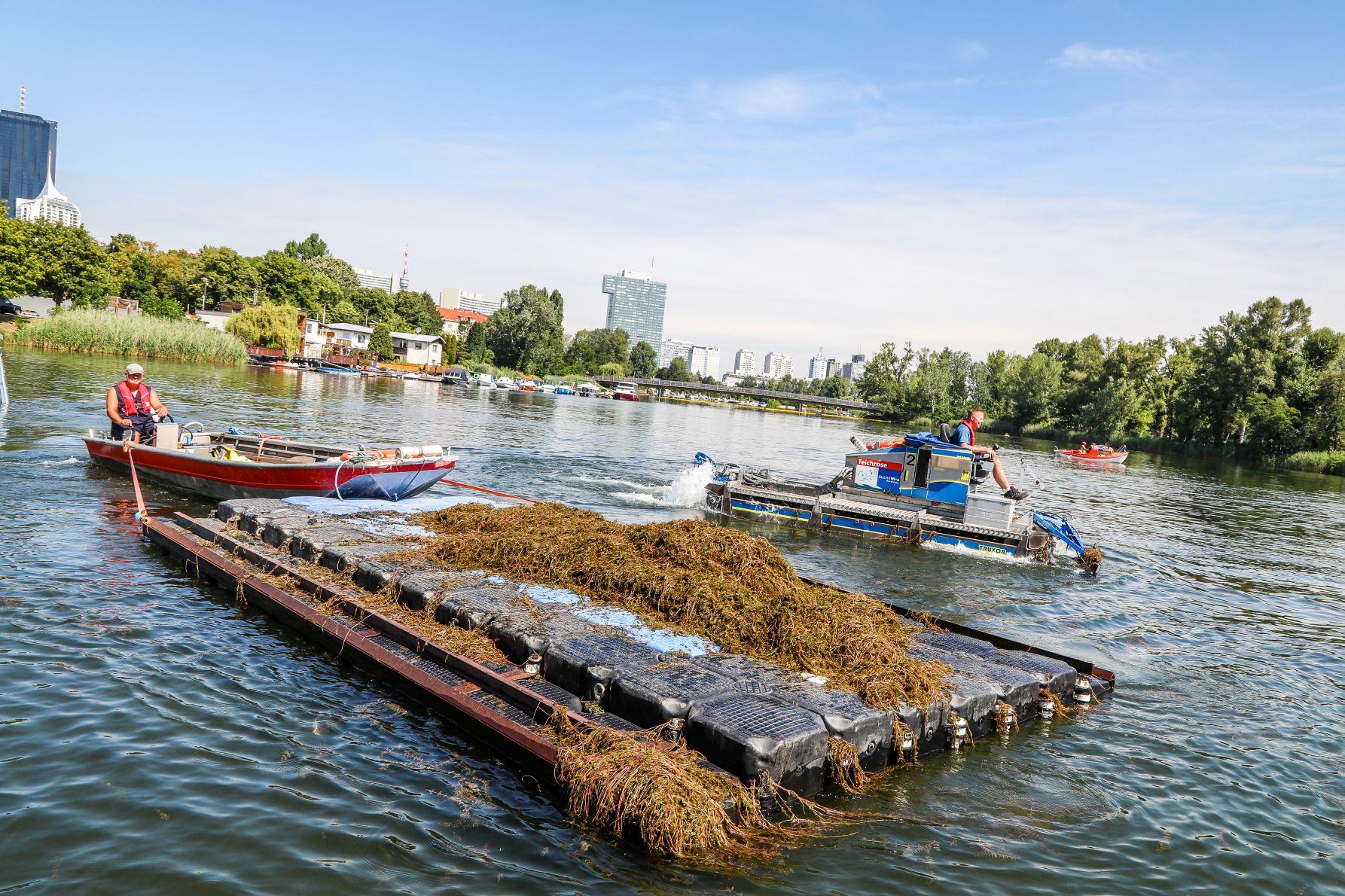 Mähboote in der Alten Donau starten in die Saison 2021. Bild: PID/Christian Fürthner.
