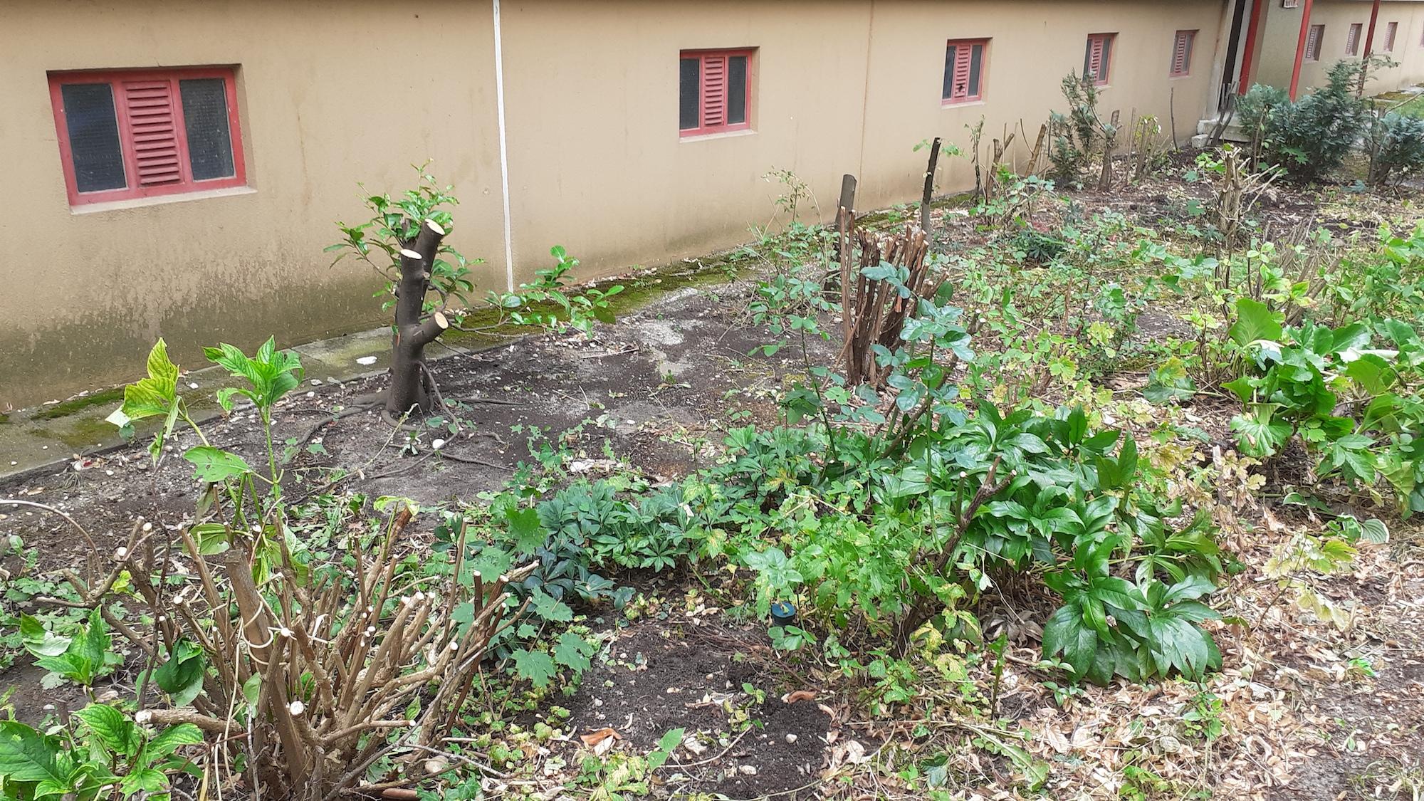 Alle Pflanzen abgeschnitten. dann wurde auch noch gerodet. Bild: Privat.