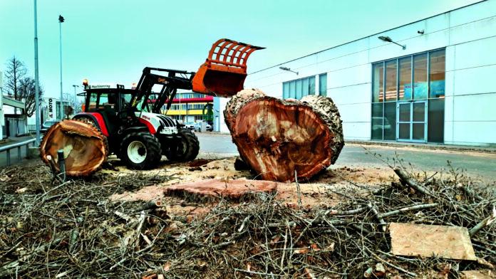 Baum beim Eurospar an der Prager Straße. Bild: Privat.