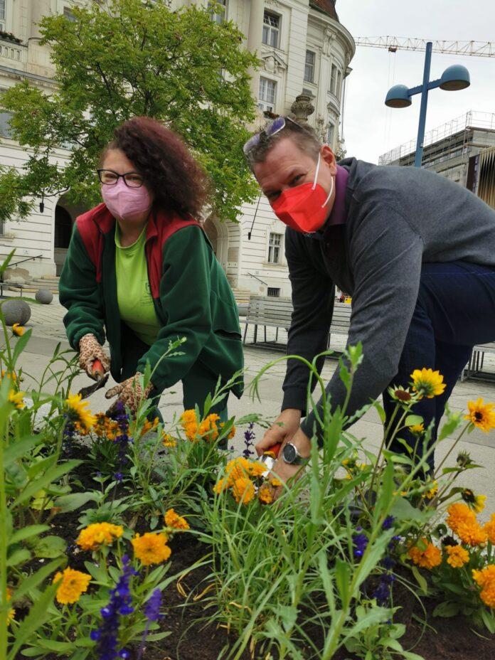 Dieser Tage werden 20.000 Sommerblumen in die Blühblumenbeete des 21. Bezirks gepflanzt. Bild: BV21.