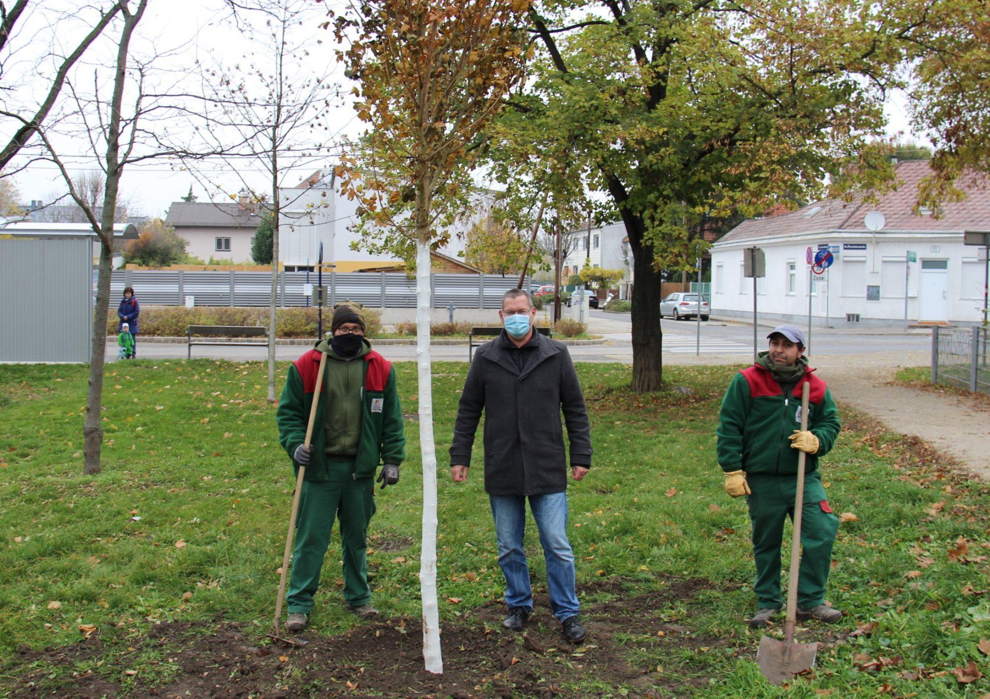 Baum steht. Bezirksvorsteher Georg Papai mit Mitarbeitern der MA42. Bild: BV21.