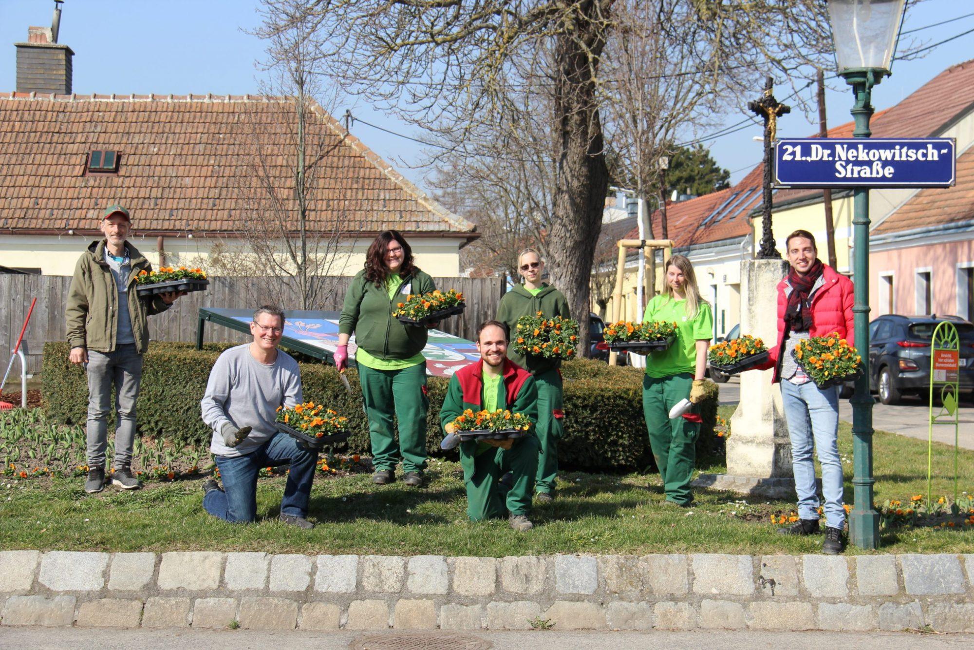 Blumenpflanzungen in Stammersdorf. Bild: BV21.