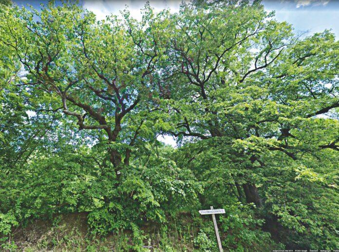 Zwei Linden an der Landesgrenze. Bild: Google Maps.