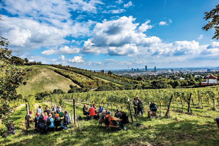 Weinwandertag. Foto: PID/Furthner.
