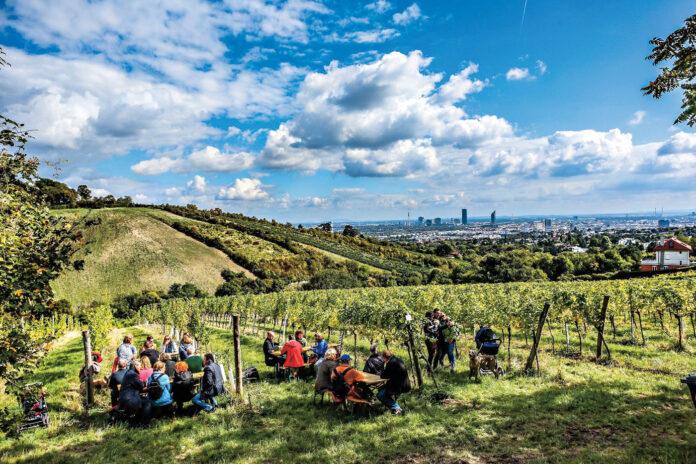 Weinwandertag. Foto: PID / Christian Fürthner.